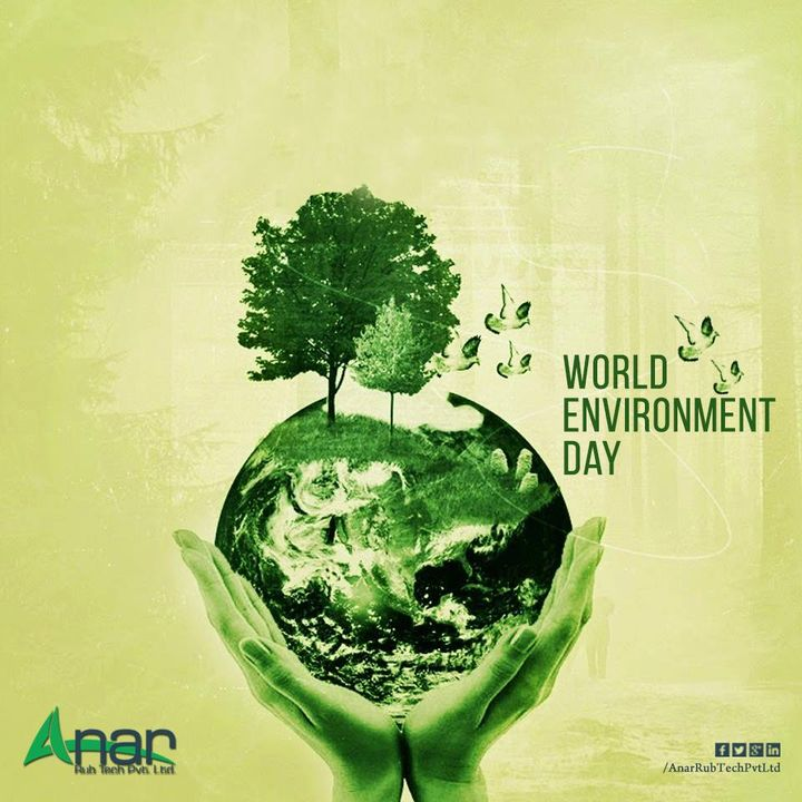 Think about the #environment together. Why not plant a #tree today?  Let's celebrates World #EnvironmentDay!!!