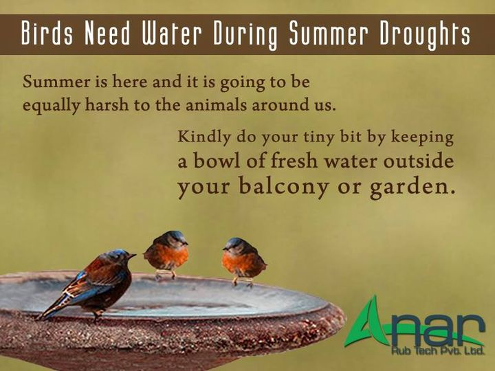 Summer is here and it is going to be equally harsh to the animals around us. kindly do your tiny bit by keeping a bowl of fresh water outside your balcony or garden  #AnarRubTech #LeafTypeAirExpandingShaft #RubberRoller #RubberExpander #SafetyChuck #AirExpandingShaft #PURoller #AirShafts